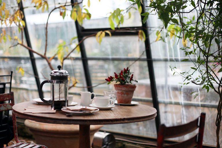 Plantas no apartamento: saiba como escolher a ideal