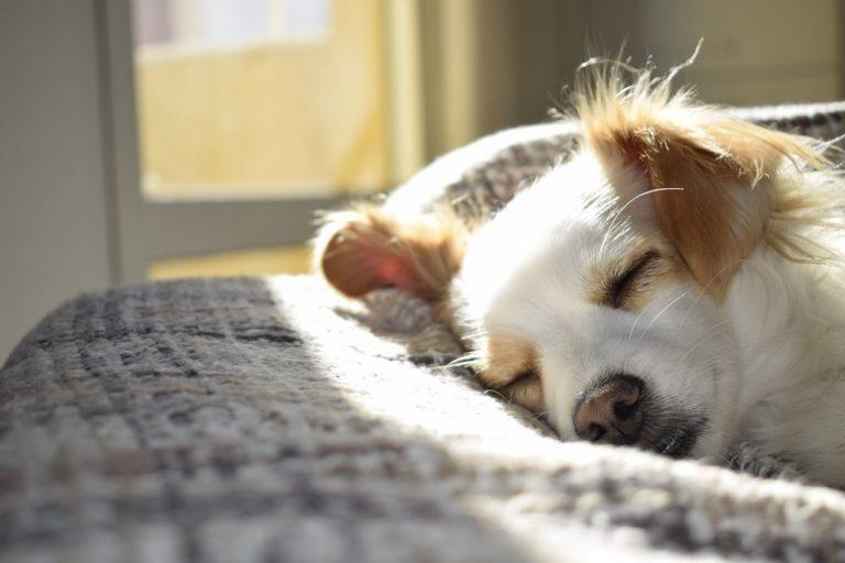 6 dicas para ter um animal de estimação no apartamento