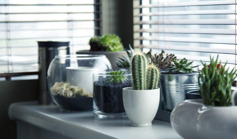 7 Plantas que exigem pouco cuidado para ter em casa